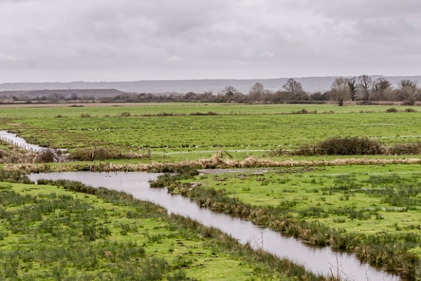 """Call for proposals for """"Restoration of wetlands and peatlands"""""""